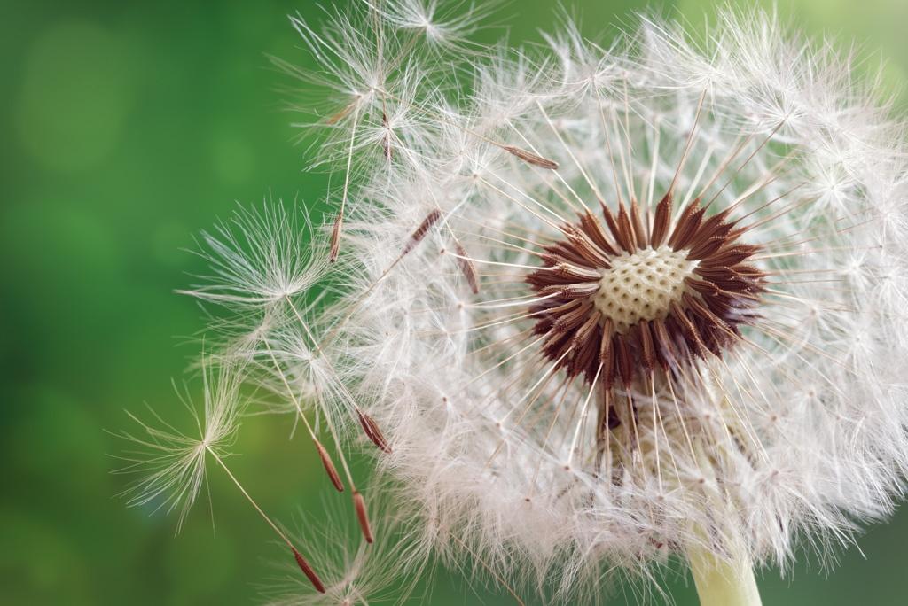 Pyłki, trawy, nowalijki, owady
